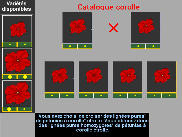 corolle2