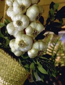 Gousses d'ail © Secrets de plantes
