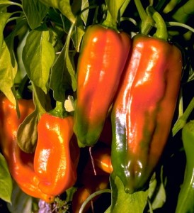 poivronss © Secrets de plantes