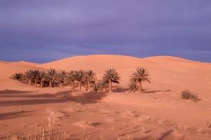 désert © Secrets de plantes
