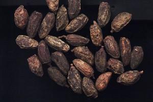 Graines de margousier © Secrets de plantes