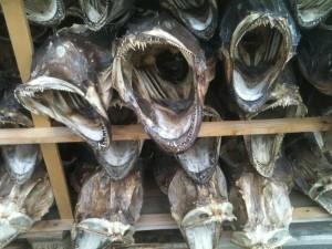 têtes de morue séchées, conditionnées
