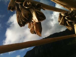 têtes de morue séchées - Norvège