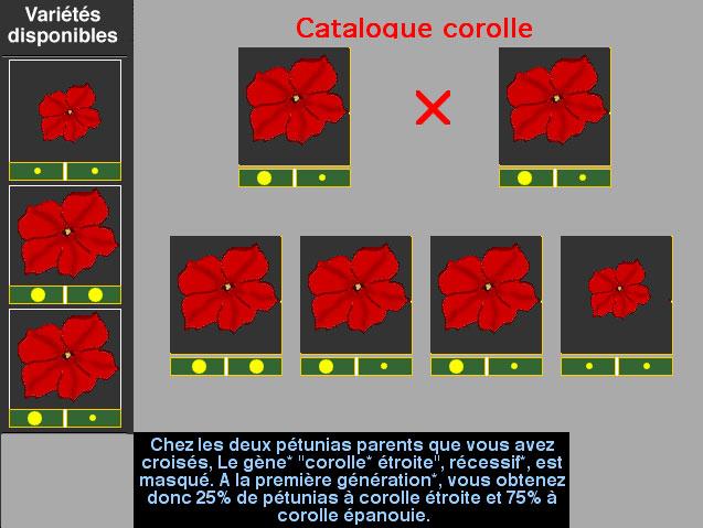 corolle1