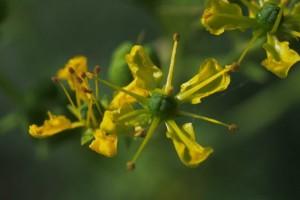 fleurs de rue © Secrets de plantes