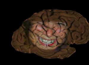cerveau5