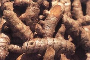 racine de curcuma c Secrets de plantes