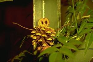 © Secrets de plantes