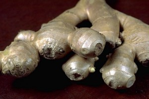 racines de gingembre © Secrets de plantes