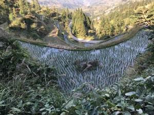 culture du riz - Guizhou