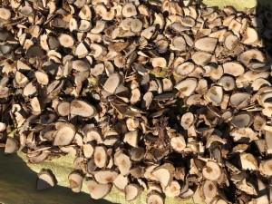 plante médicinale du Guizhou