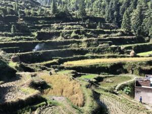 rizières - Guizhou