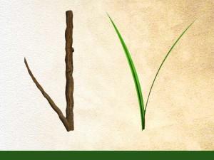 ligneux ou herbacé?