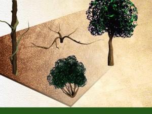 différents types de plantes ligneuses