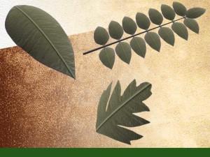 grands types de feuilles
