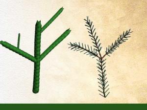 type de feuilles des gymnospermes