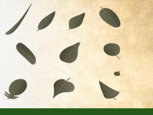 forme des feuilles