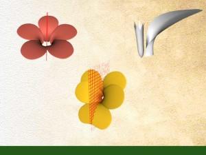 Symétrie de la fleur