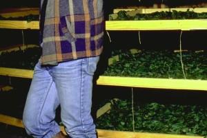 Séchoir pour plantes