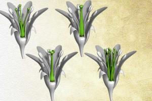 organe femelle de la plante