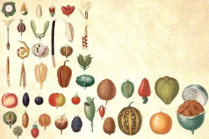 Types de fruits