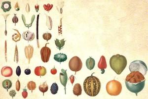 Types de fruits