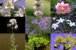Fleurs avec pédoncule