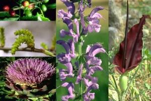 Fleurs sans pédoncule