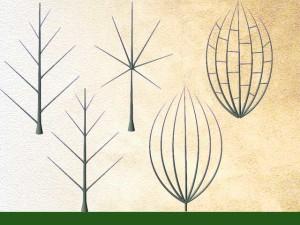 Différentes nervurations de feuilles