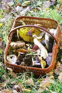 Une bonne récolte de champignons