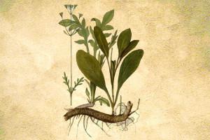 Valerianaceae